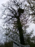 Besetzter Baum