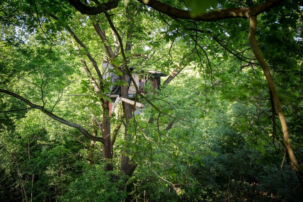 Wdr Hambacher Forst