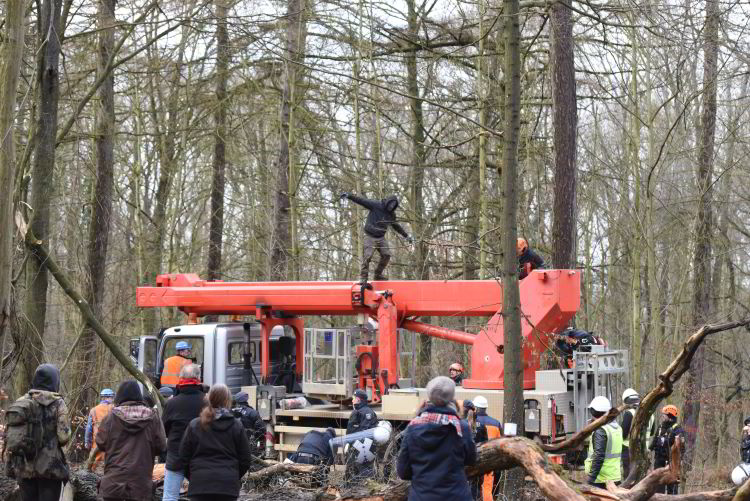 Image result for Hambacher Forest